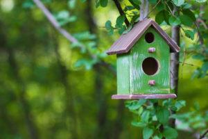 Abris et mangeoires pour oiseaux