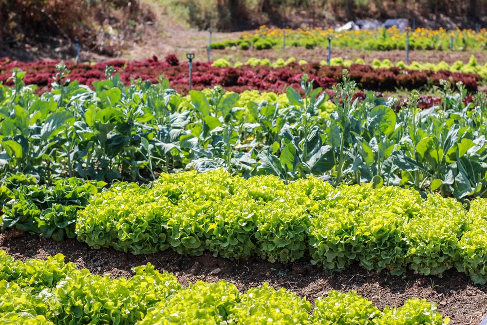aménager jardin petit prix