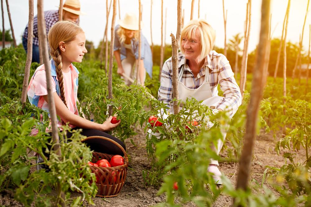 jardin en bonne santé