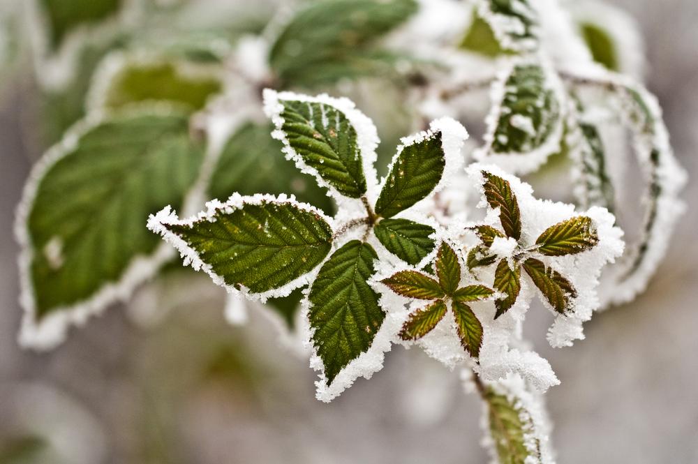 plantes gel