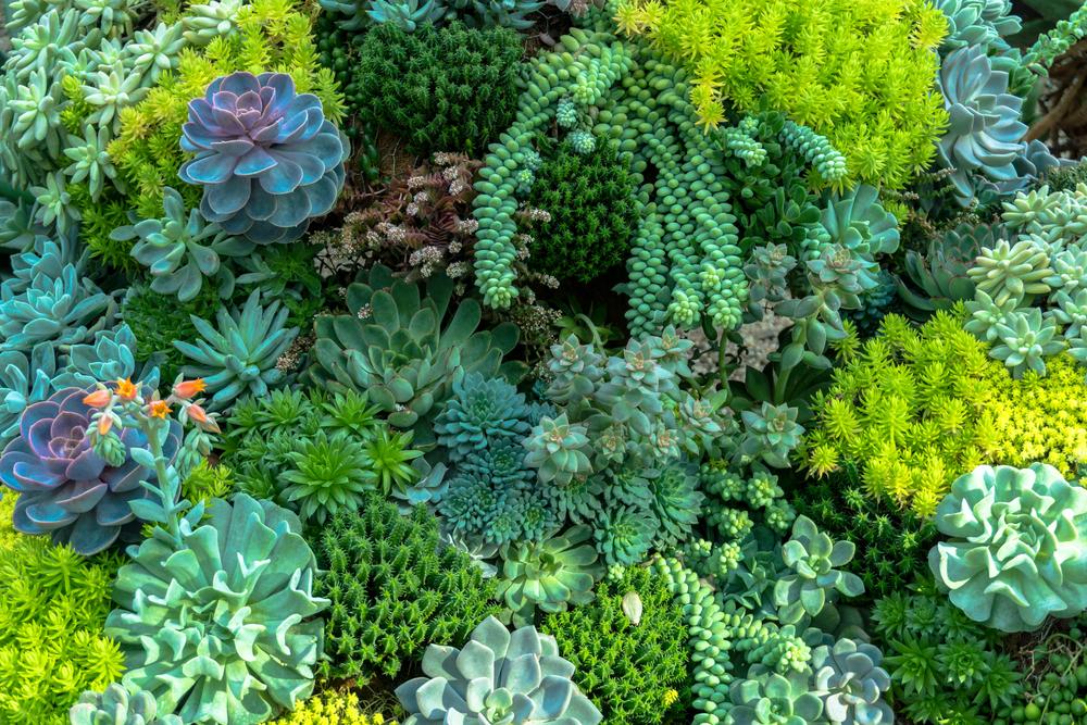 plantes indispensables