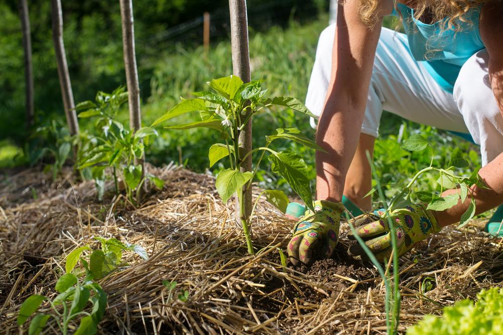 utiliser paillis jardin