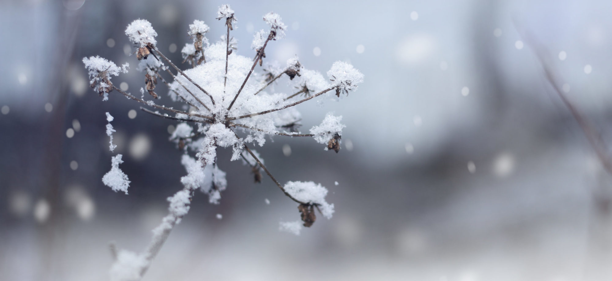 Entretien des jardins en zone froide